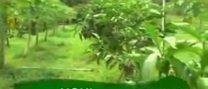Noni conheça a fruta noni e seus benefícios – www.nonivendaonline.com.br