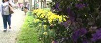 O pólen das flores costuma causar alergia em você? então saiba o que fazer.